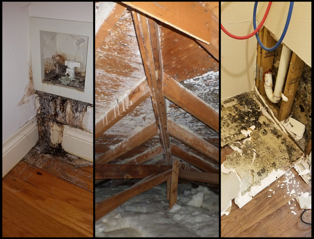 Mold testing, inspection, and remediation from Americlean