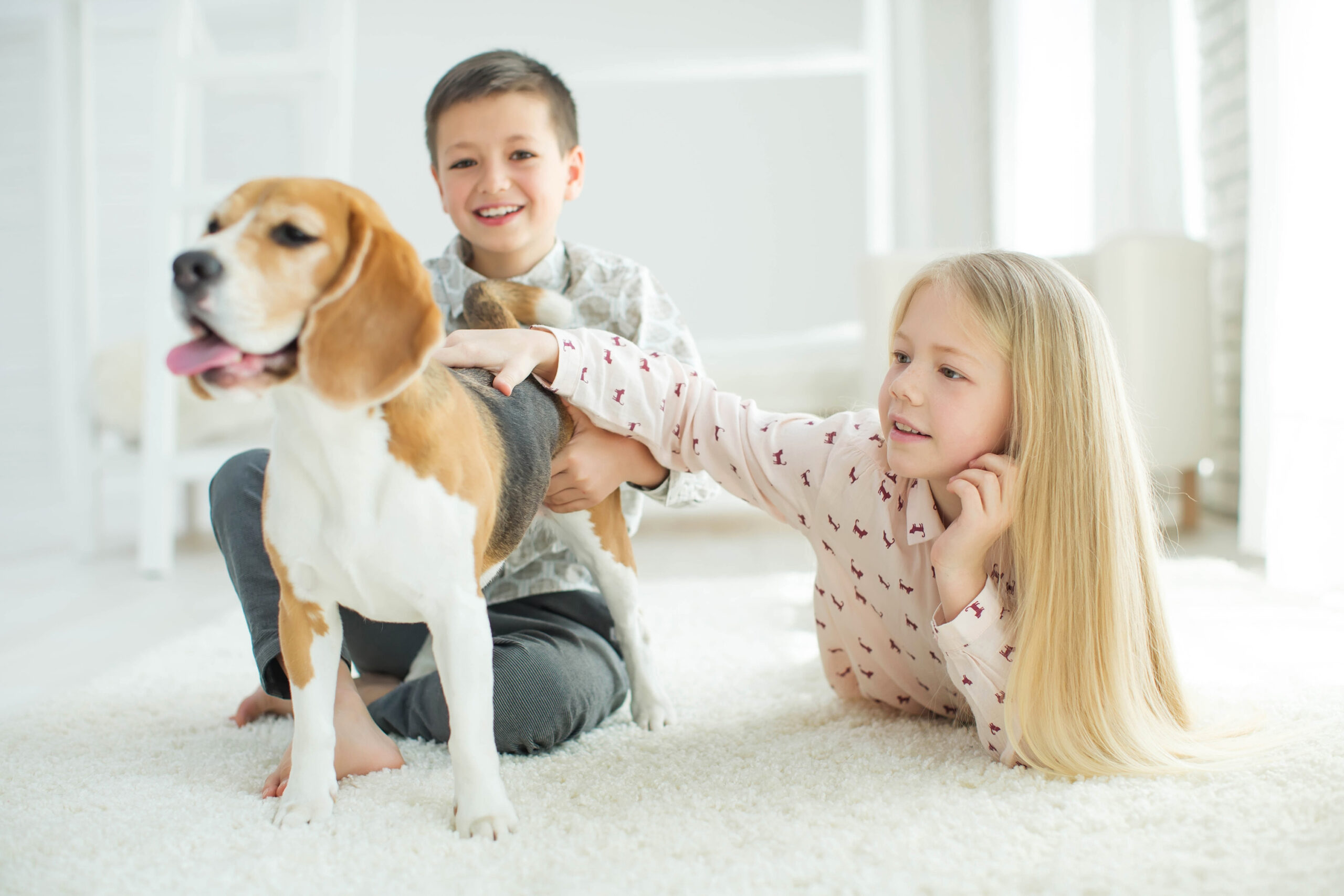 What To Expect When You Get Your Carpets Cleaned by Americlean