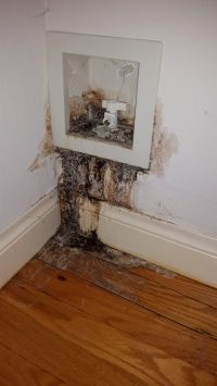 Americlean Mold Water Leak